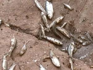 Peixes foram encontrados mortos no Rio Itapecerica (Foto: Reprodução/TV Integração)