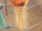 Agricultores de MS comemoram o preço da soja em alta