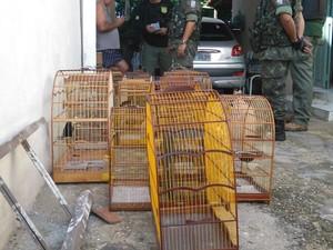 Animais eram mantidos presos em gaiolas (Foto: Polícia Ambiental)