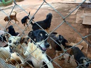 70% de cães do abrigo da ONG de Piracicaba são idosos (Foto: Fernanda Zanetti/G1)