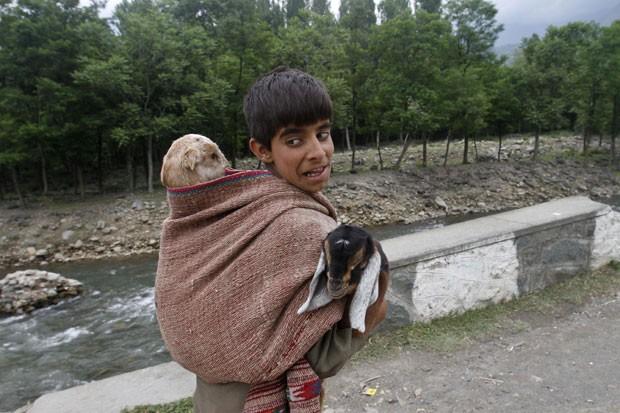 Um jovem indiano foi flagrado carregando uma cabra nas costas e outra debaixo dos braços em uma estrada nos arredores de Srinagar, na Índia, nesta terça-feira (28)  (Foto: Mukhtar Khan/AP)