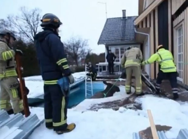 Alce foi resgatado após ser encontrado entalado em piscina (Foto: Reprodução)