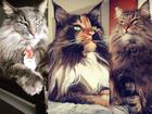 Confira cuidados e dicas para evitar doenças em gatos