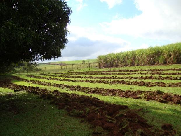 Estão sendo plantadas 1.200 mudas de espécies nativas  (Foto: Prefeitura de Bariri/Divulgação)
