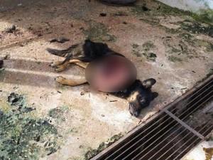 Cachorro é encontrado mutilado em canil de Ibiá (Foto: ACV/Divulgação)