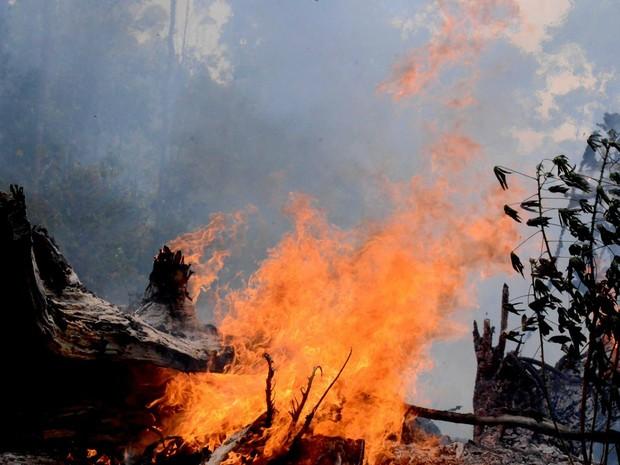 Fofográfico registrou incêndio em trecho da BR 319 (Foto: Chico Batata/Divulfação)