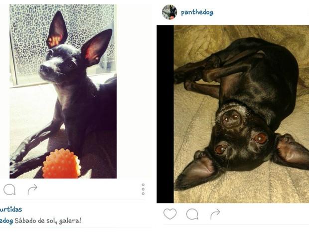 Panqueca tem quatro anos de idade e cerca de 340 seguidores no Instagram (Foto: Reprodução Instagram)