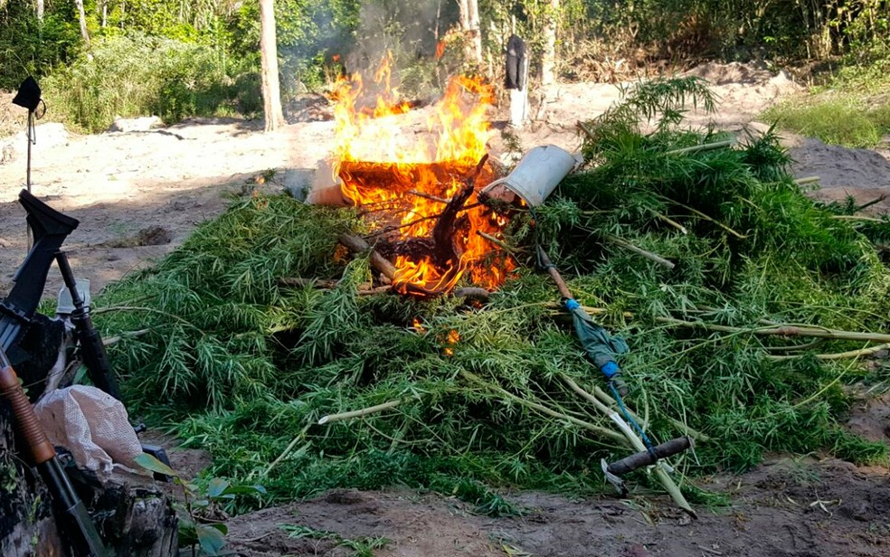 Droga foi incinerada pela polícia em Esplanada (Foto: Divulgação/Polícia Civil)