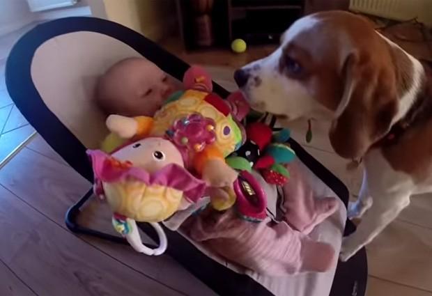 'Charlie' fez de tudo para pedir desculpas para bebê e a cobriu de brinquedos  (Foto: Reprodução/YouTube/CharlieDaDog)