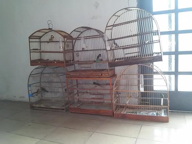 Pássaros estavam em uma casa no Núcleo JK  (Foto: Polícia Ambiental / Divulgação)