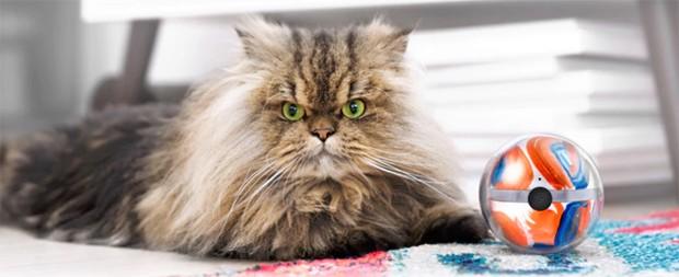 A Pebby também tem raios laser, uma das diversões favoritas dos gatos (Foto: Divulgação)
