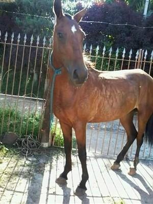 Por conta do desaparecimento de égua, menina de Mogi das Cruzes ficou dois dias sem comer (Foto: Yasmin Lopes/ arquivo pessoal)
