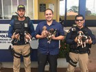 Agentes da PRF resgatam 8 filhotes de cachorro na BR-210, no Amapá
