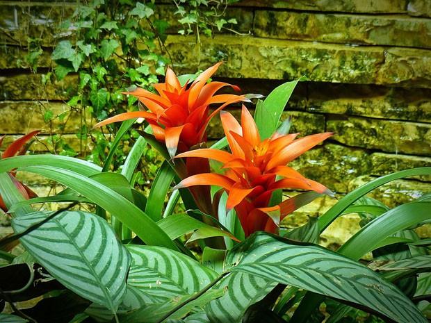 6 flores que precisam de muita luz e pouca água (Foto: Divulgação)