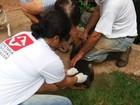 Bauru inicia etapa urbana da vacinação antirrábica neste domingo