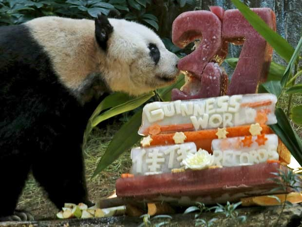 'Jia Jia' tornou-se o panda gigante de cativeiro mais velho do mundo, ao completar, nesta terça-feira (28), 37 anos. O bicho ganhou um bolo de aniversário feito de gelo, verduras, legumes, vegetais, flores e raízes, preparado pelo Ocean Park de Hong Kong. Sua idade é equivalente ao centenário de um ser humano.  (Foto: Bobby Yip / Reuters)
