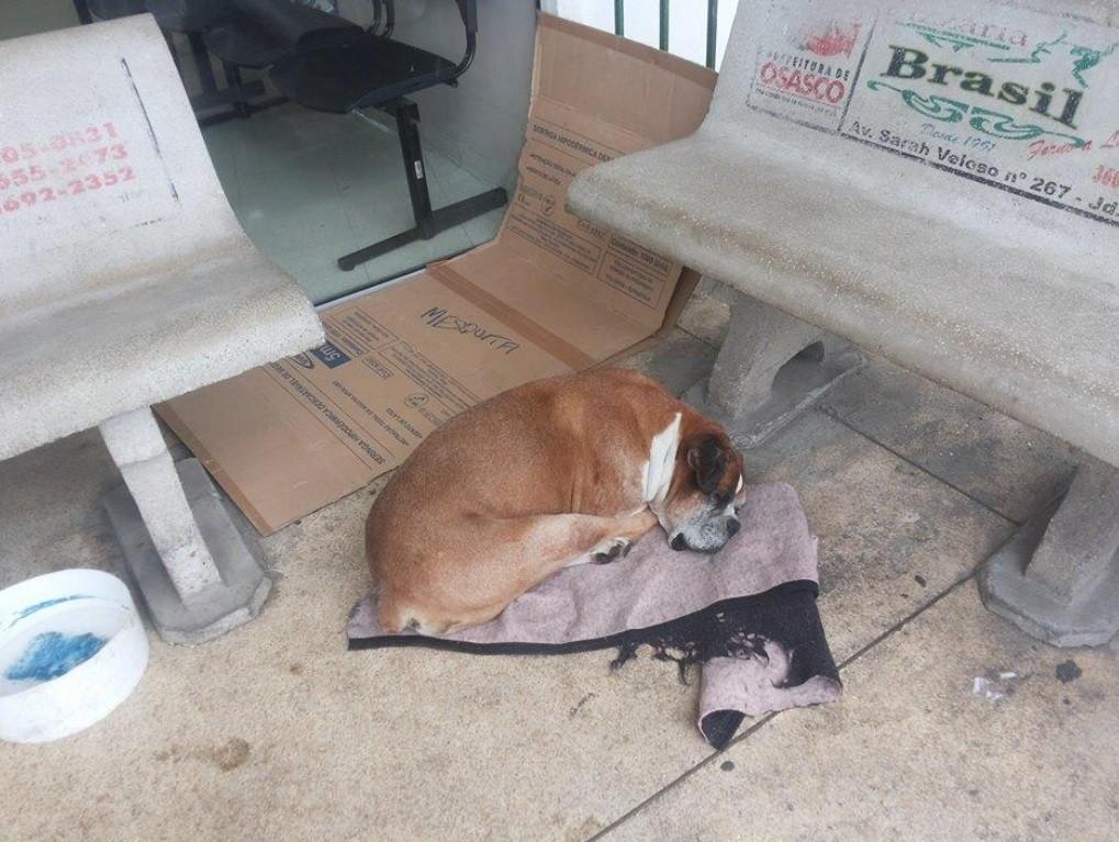 O cachorro, que agora se chama Antonio, na porta do pronto socorro (Foto: Reprodução/Facebook)