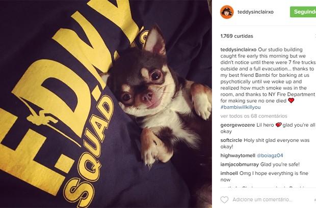 Natalia Kills revela que cachorrinho Bambi a salvou de incêndio (Foto: Reprodução/Instagram)
