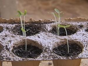 Planta atrai insetos (Foto: Reprodução / TV TEM)