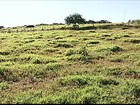 No Triângulo Mineiro, calor e baixa umidade afetam as pastagens