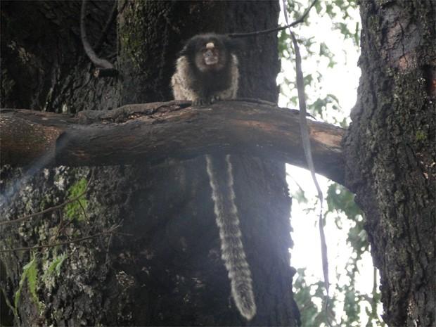 Prefeitura diz que aguarda o estado para retirar os macacos da área verde (Foto: Eduardo Guidini/ G1)