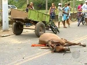 Cavalo e ciclista foram mortos após serem atingidos por veículo (Foto: Reprodução / Inter TV)