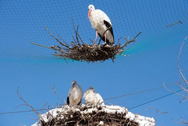 Cegonha construiu seu ninho diretamente acima de outro ninho (Foto: Julian Stratenschulte/AP)