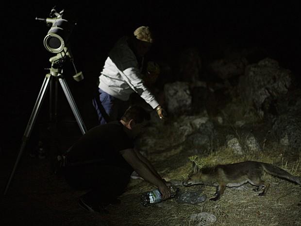 Raposa (Foto: Jon Nazca/Reuters)