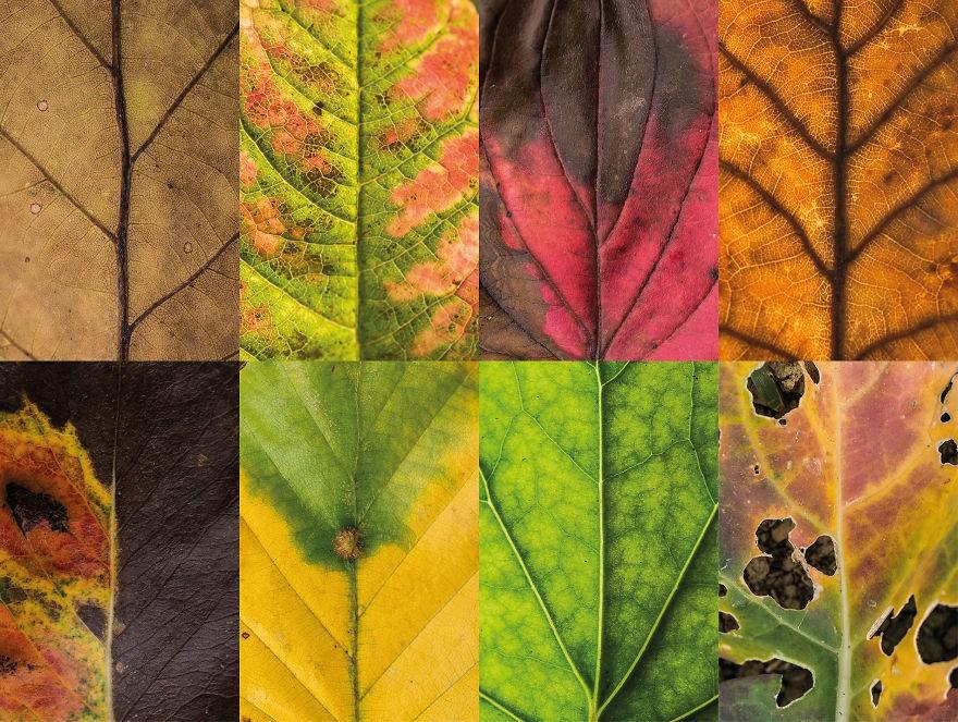 folhas outono 2 (Foto: Carola Becker)