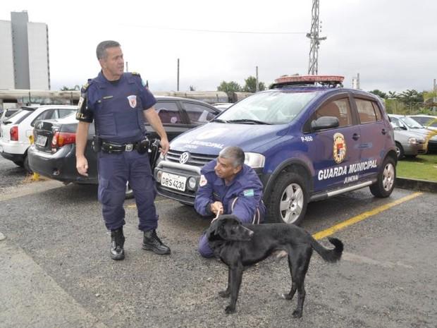 Cachorro ficará na sede da GCM até que seja adotado (Foto: GCM/Divulgação)