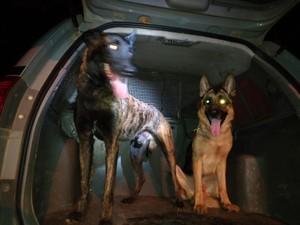 Cães farejadores ajudaram a encontrar as drogas (Foto: Polícia Militar/ Divulgação)
