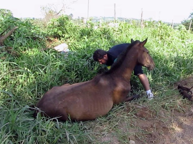 Assaltantes atropelaram cavalo durante fuga em Passos, MG (Foto: Hélder Almeida)