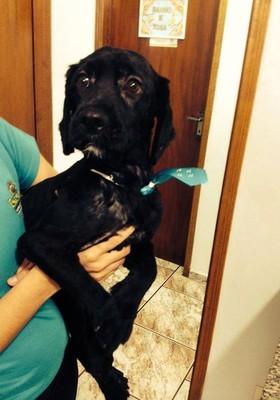 Cão abandonado em pet shop  (Foto: Divulgação/Pet Shop Enkrenkinhas)