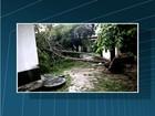 Ventos de 80 km/h derrubam árvores e deixam bairros sem luz em Maricá