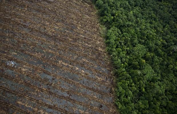 Imagem aérea do desmatamento na ilha de Sumatra, na Indonésia (Foto: Ulet Ifansasti/Getty Images)