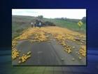 Caminhão tomba e espalha carga de laranjas em vicinal de Itaporanga, SP