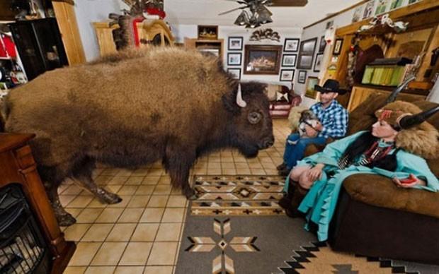 Apelidado de o 'encantador de búfalos', o americano RC Bridges mantém dois bisões como animais de estimação em sua casa em Quinlan, no estado do Texas (EUA). Ele e sua mulher, Sherron, cuidam de Wildthing, que pesa mais de uma tonelada, há alguns anos, e 'Bullet', de 410 quilos, que foi incorporado recentemente à família. (Foto: Reprodução)