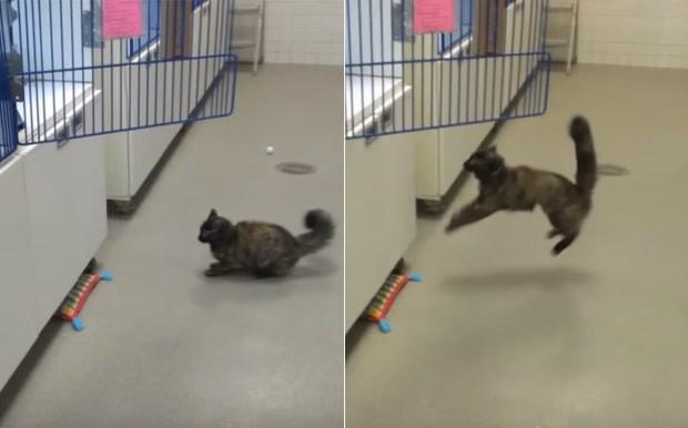 Gato virou hit ao falhar várias na tentativa de saltar em gaiola (Foto: Reprodução/YouTube/ America's Funniest Home Videos )