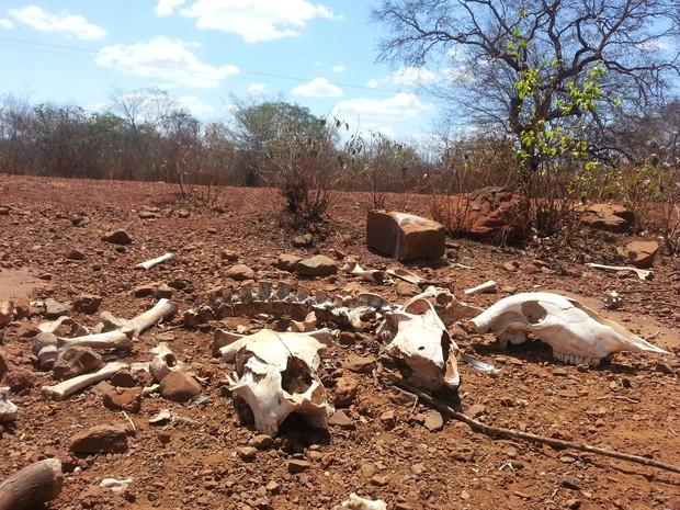 El Niño pode agravar seca em Sergipe (Foto: Carlos Maciel)