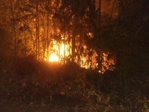 Incêndio atingiu área no Parque Municipal do Cancão, em Serra do Navio  (Foto: Dauzira Alexandre / Arquivo pessoal)
