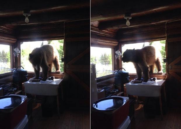 Urso ganhou o apelido de Zé Colmeia após invadir cabine de parque (Foto: Reprodução/Imgur/Doktorinjh )