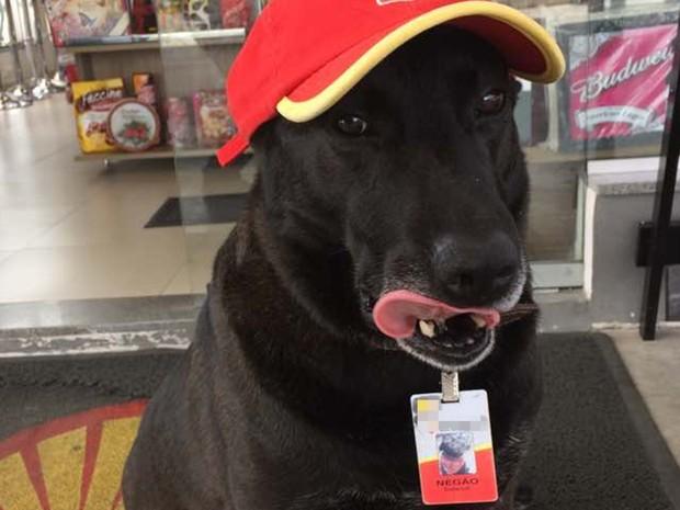 Negão precisa ter 15 crachás, porque como gosta de brincar com a identificação, geralmente acaba estragando; cão foi adotado e virou funcionário de posto de combustíveis em Mogi das Cruzes (Foto: Sabrina/Arquivo Pessoal)