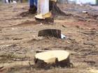 Moradores reclamam de retirada de árvores para construção de BRT