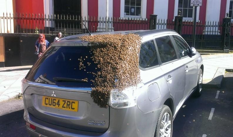 Milhares de abelha seguem rainha presa em porta-malas