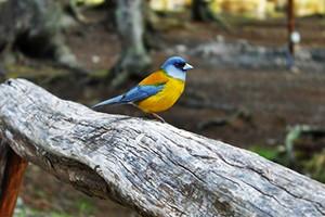 Aves que vivem no fim do mundo (Juan Bautista Cabral/Você no TG)