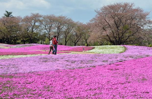 Família passeia no parque em Tatebayashi (Foto: Kazuhiro Nogi/AFP)