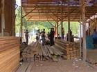PF apreende drogas e madeira ilegal em operação em Macapá e Santana