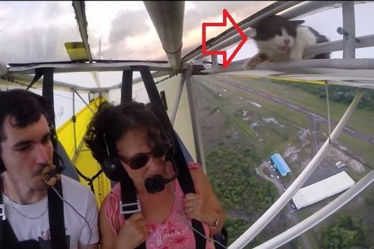 [Internacional] E daí tinha um gato na asa do avião Tinha_um_gato_na_asa