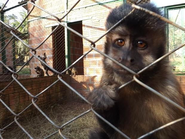 'Chica' é companheiro de 'Carla' no viveiro em Assis (Foto: Alan Schneider / G1)