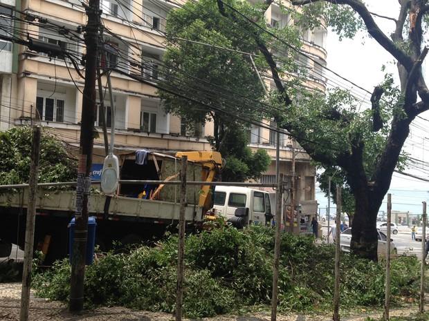 Árvore desaba na região do final da Avenida Sete, em Salvador (Foto: Alex de Paula/G1)